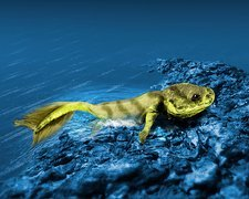 Tiktaalik prehistoric fish, artwork