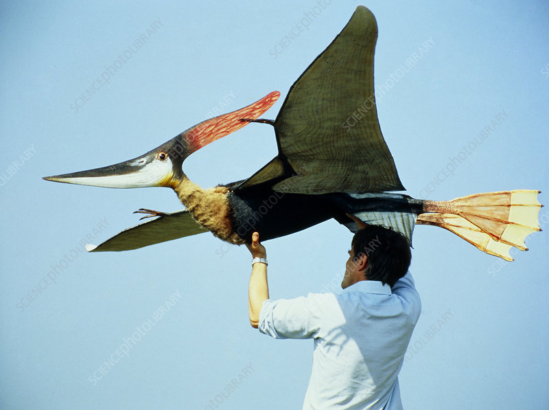 Stephen Winkworth and model pteranodon