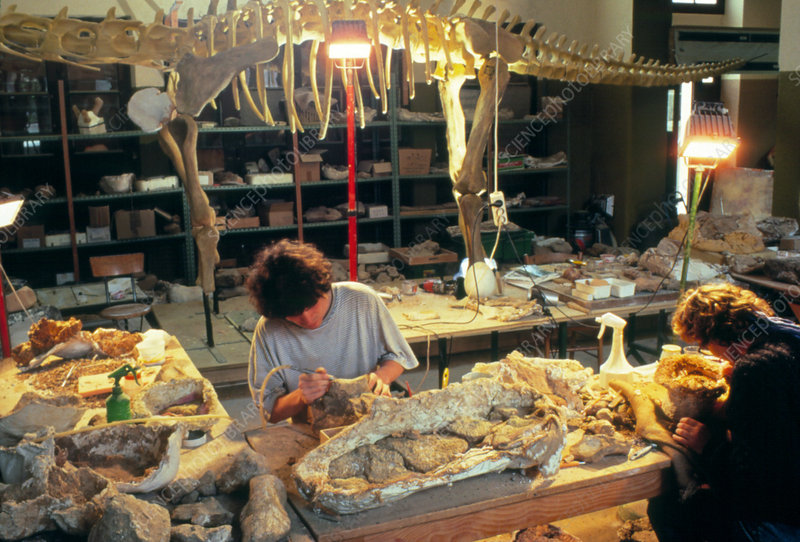 Paleontologists with fossil bone in laboratory