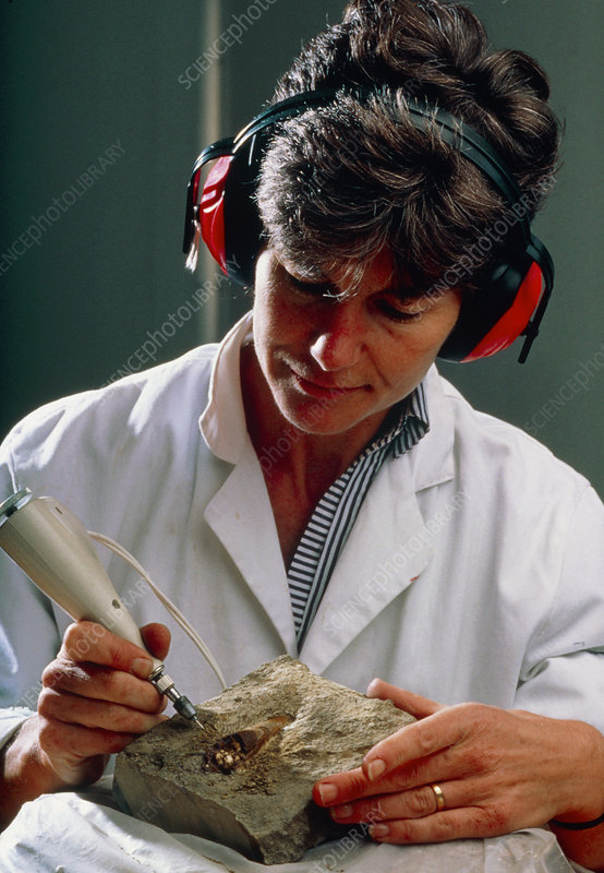 Palaeontologist preparing fossil in laboratory