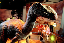 Animated model of Muttaburrasaurus in museum