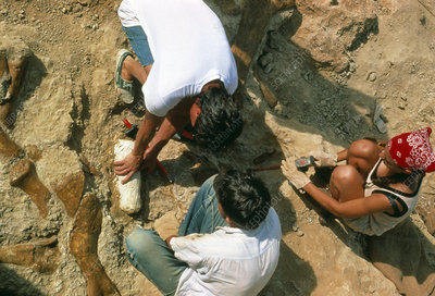Palaeontologists putting plaster cast on fossil