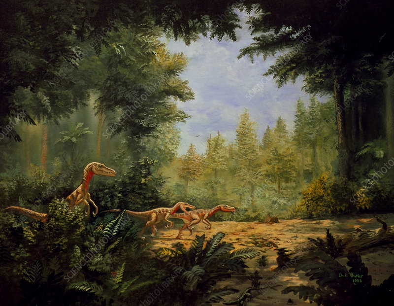 Artwork of Velociraptor sp. dinosaurs