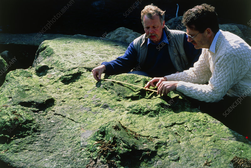 Palaeontologists measuring dinosaur footprints