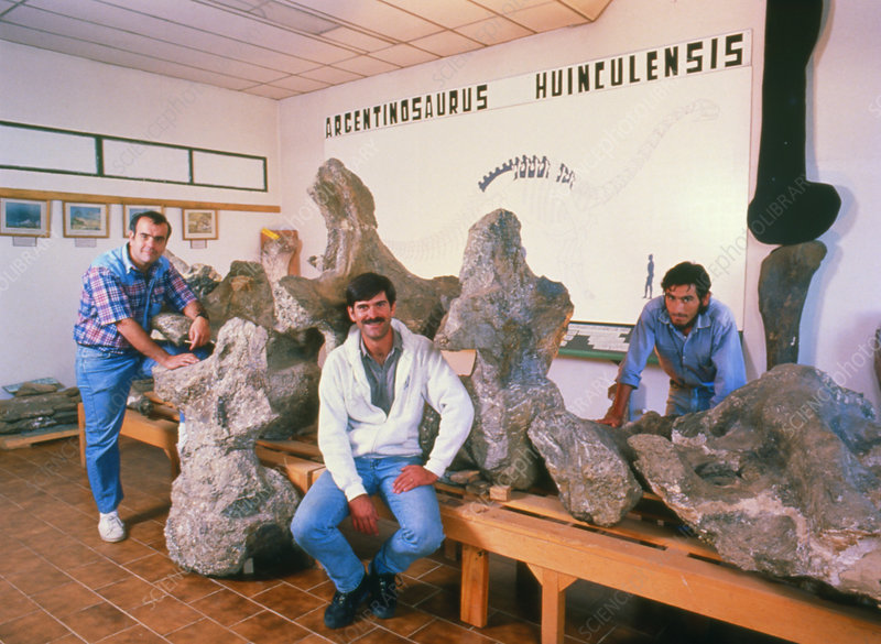 Argentinosaurus dinosaur discoverers and fossils