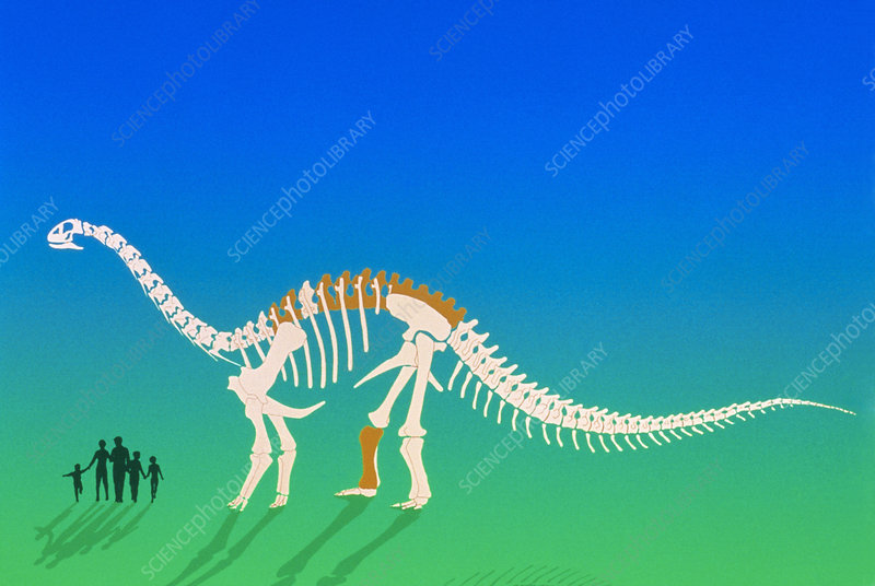 Artwork of Argentinosaurus dinosaur skeleton