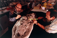 Palaeontologists measure fossil eggs of dinosaurs