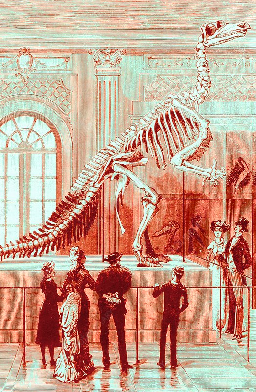 Coloured engraving of an Iguanodon museum exhibit