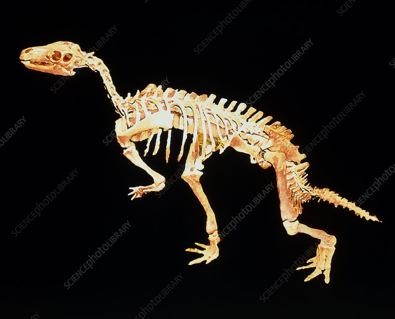 Enhanced image of a Camptosaurus dinosaur skeleton