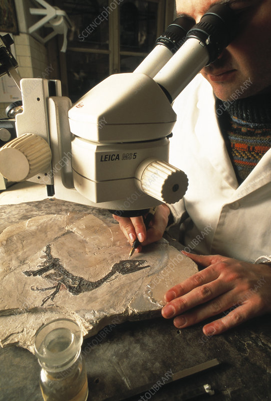 Researcher cleaning a dinosaur fossil
