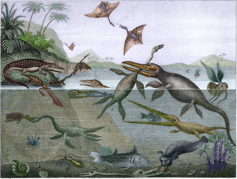 Mesozoic sea life