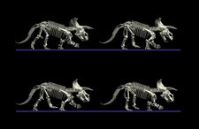 Triceratops dinosaur movement
