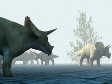 Triceratops dinosaurs