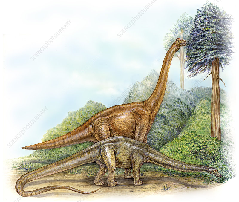 Sauropod feeding strategies