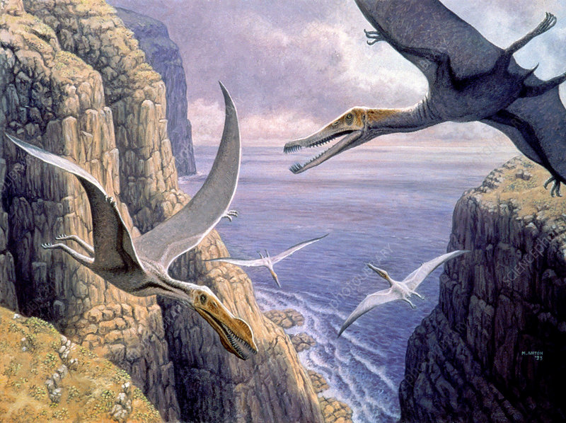 Flying pterosaurs