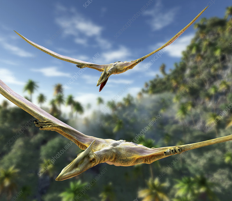 Pterosaurs flying, computer artwork