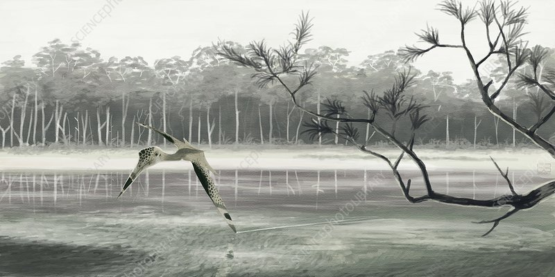 Pterosaur (Quetzalcoatlus sp.), artwork