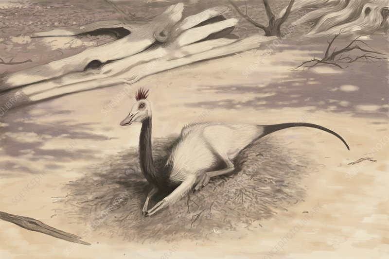 Gallimimus dinosaur, artwork
