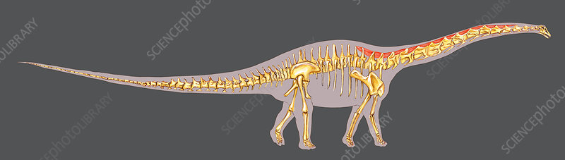 Dinosaur Neck Structure