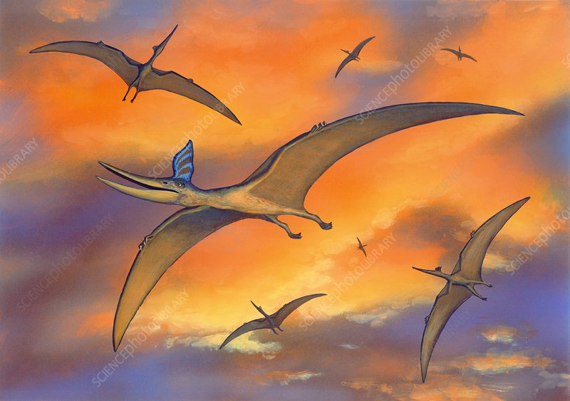 Pterosaur flying reptiles, artwork