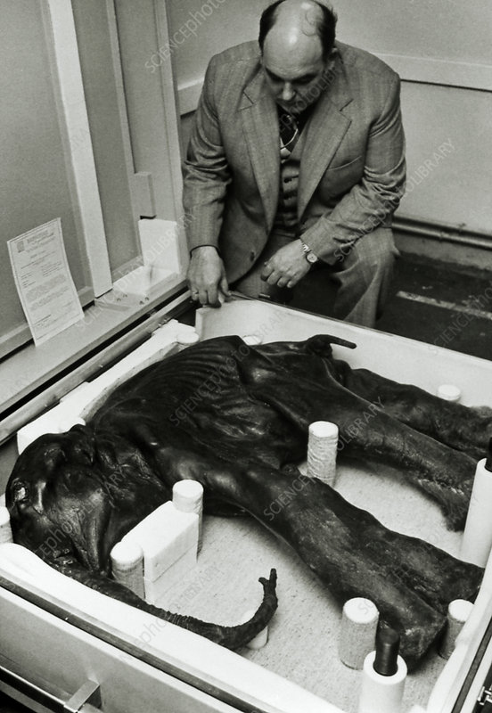 Scientist examining carcass of baby mammoth