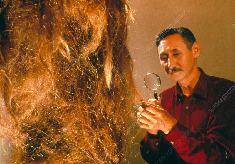 Scientist examines the hair of a woolly mammoth