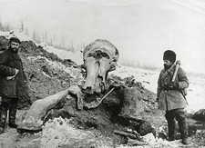 Fossil mammoth excavation