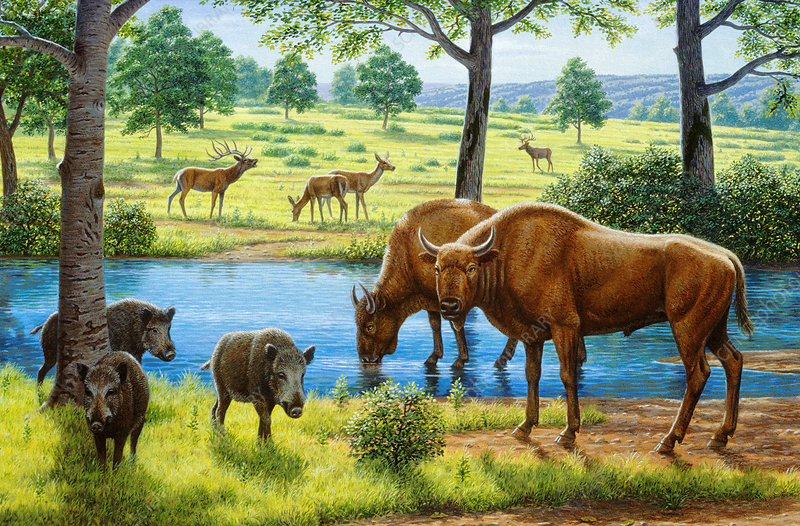 Wildlife of the Pleistocene era