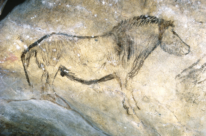 http://www.sciencephoto.com/image/173163/large/E4480099-Cave_paintings-SPL.jpg