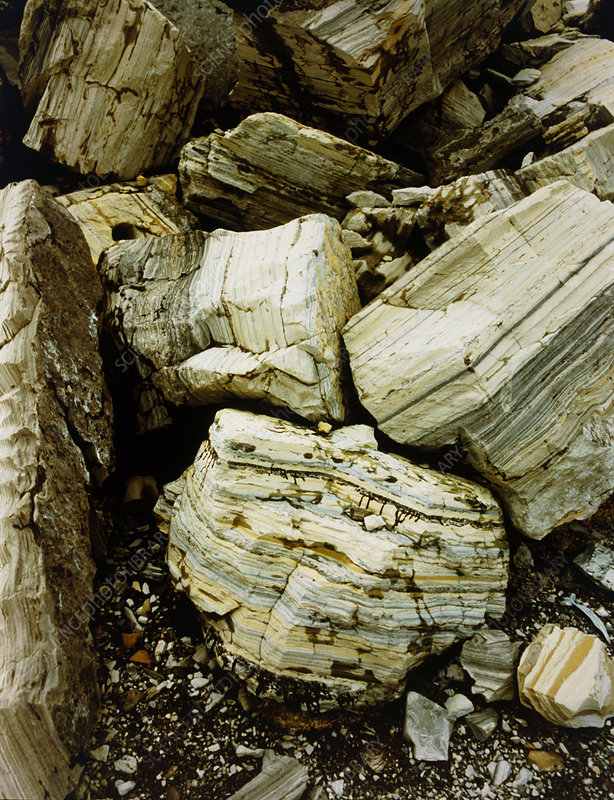 Blocks of oil shale (marlstone)