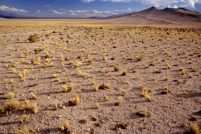 'The Altiplano, Andes, Argentina'