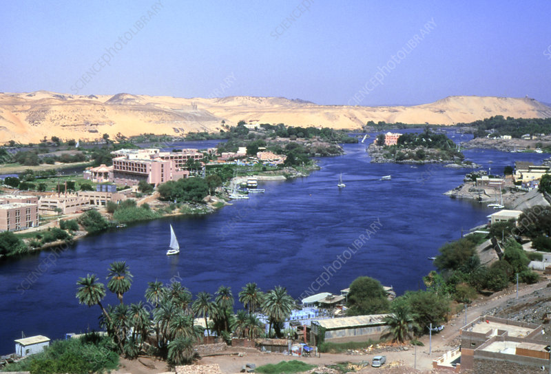 Vegetation growing along the banks of the Nile