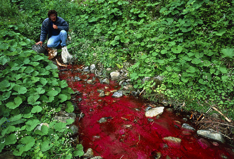 Hydrologist studying river coloured with dye