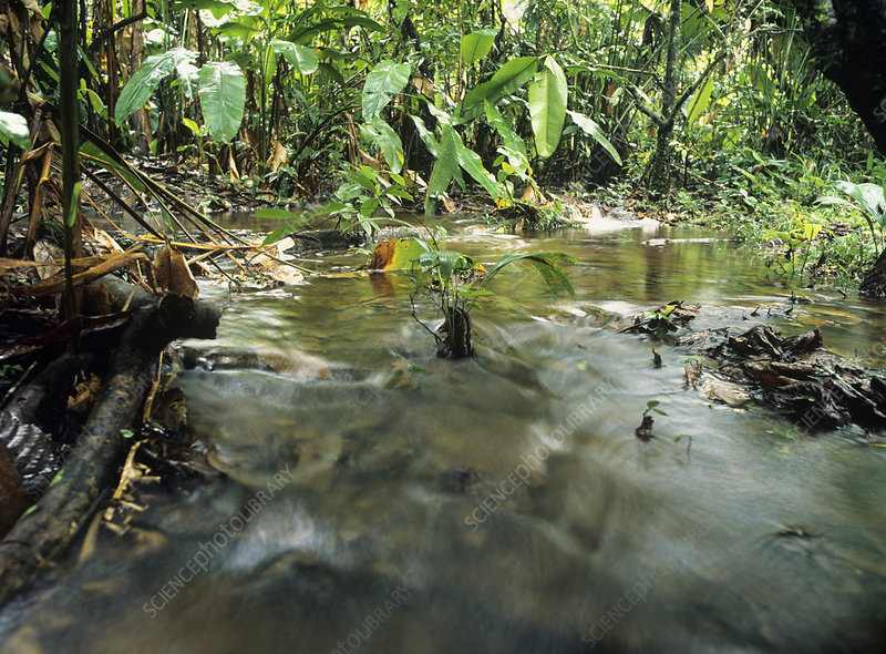 Overflowing Amazonian stream