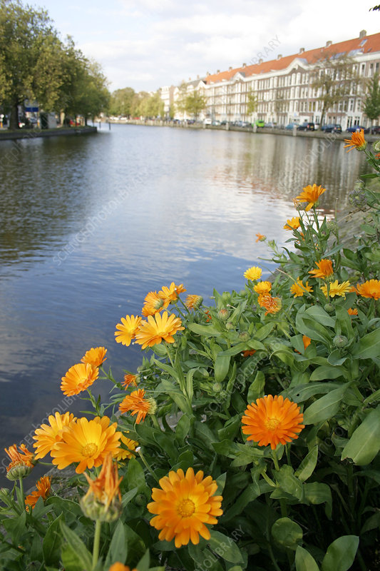 Flowerbed beside a canal