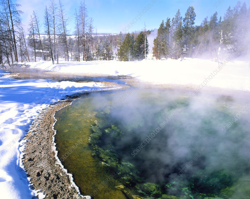 Minerals and algae in hot spring in winter