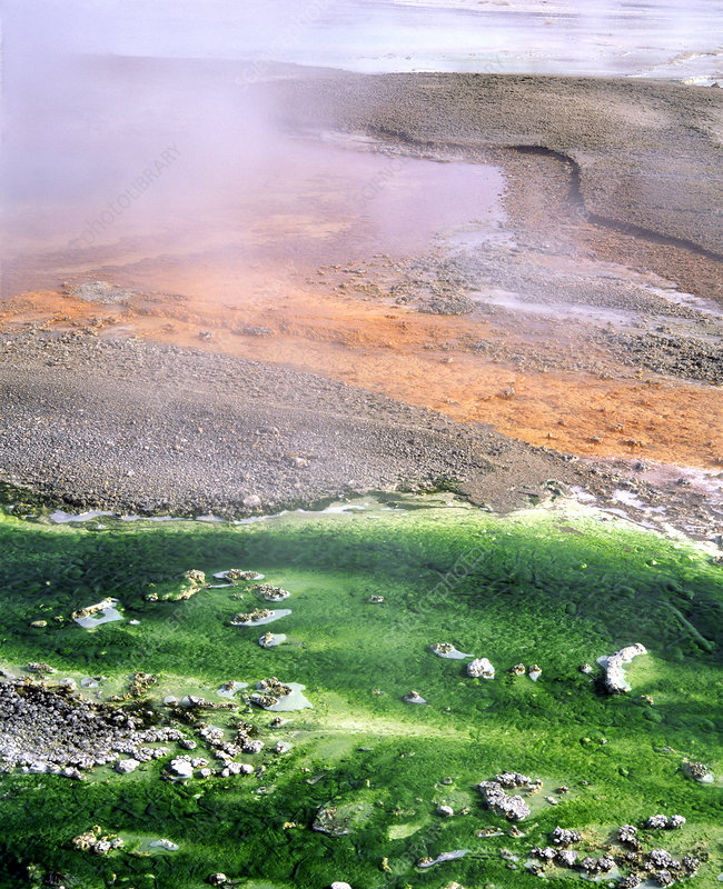 Minerals and green algae in hot spring channels