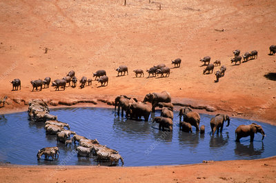 Animals gathered at waterhole