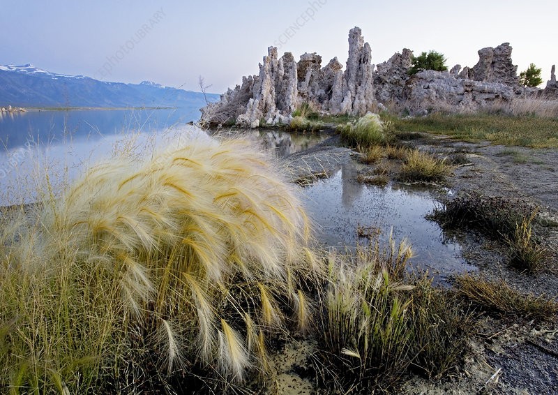 Tufa towers at Lake Mono