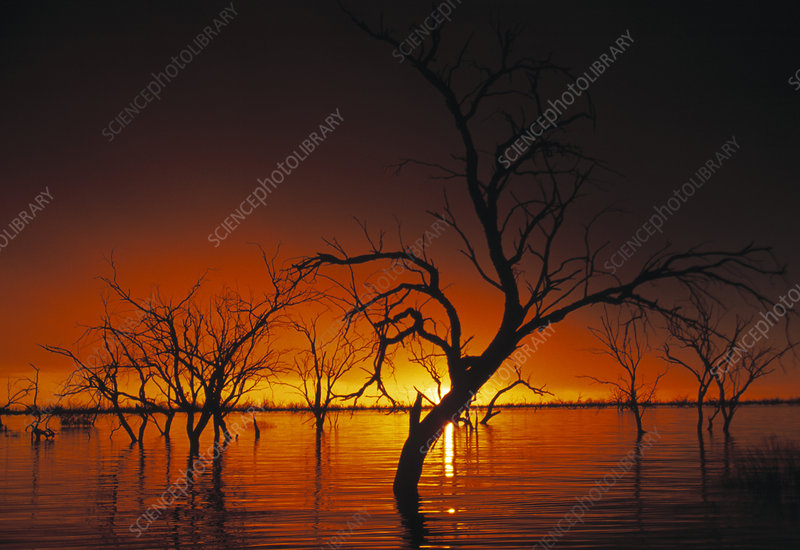 Drowned trees at sunset
