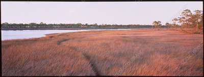 Coastal salt marsh.