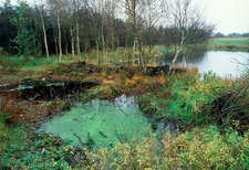 The bog where Tollund Man was found