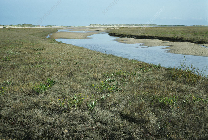 Land formation, on salt marsh