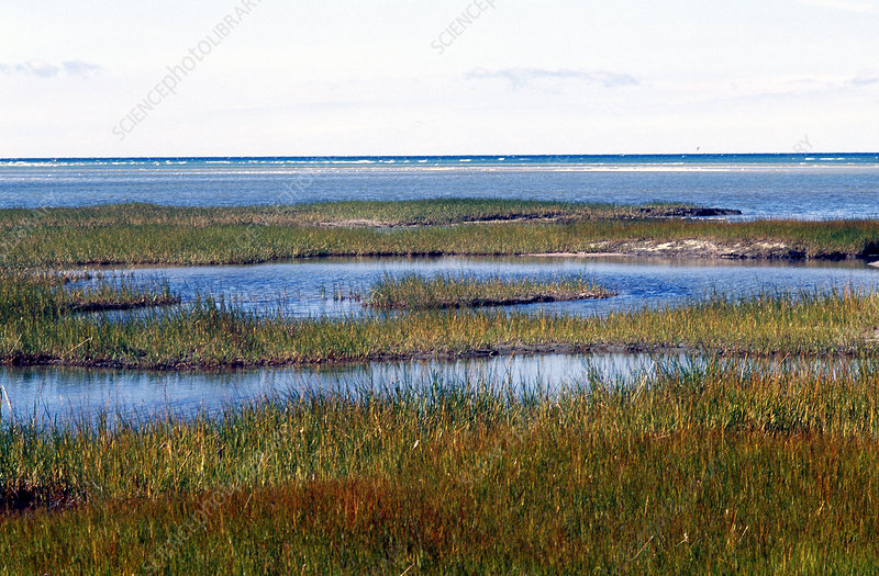 Cape Cod Salt Marsh