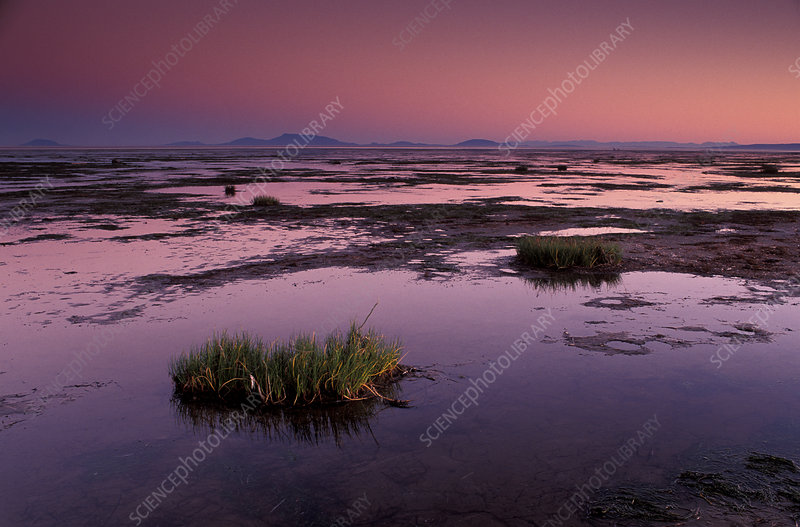 Mud flats at low tide