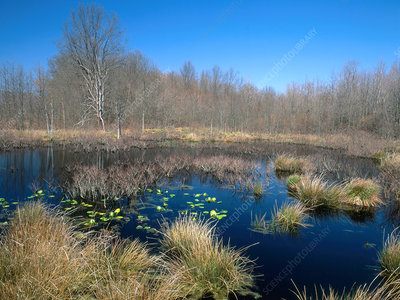 Great Swamp in Spring