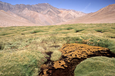 'Wetlands (Bofedales), Andes, Chile'