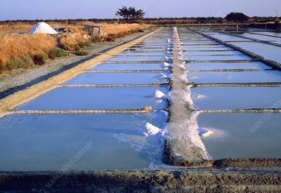 Unrefined salt at salt pan in France