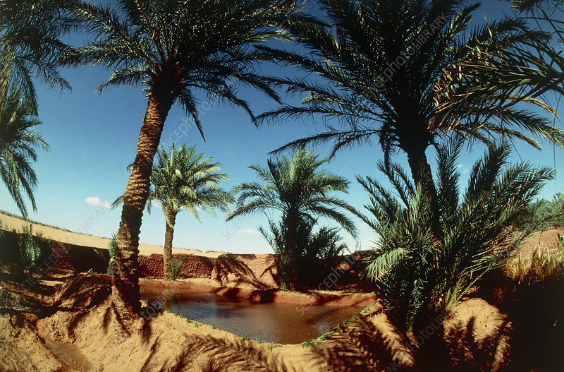 Oasis on the road south of Adrar, Algeria