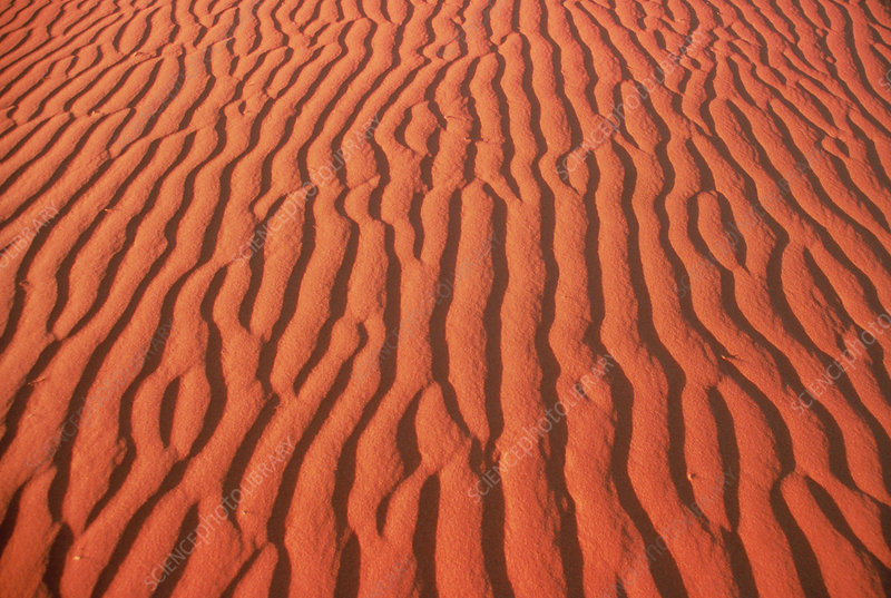 Ripples on red sand dune